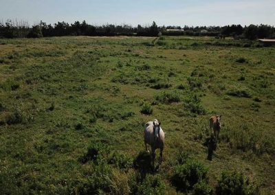 Mas Trinita | Gîte équestre en Camargue